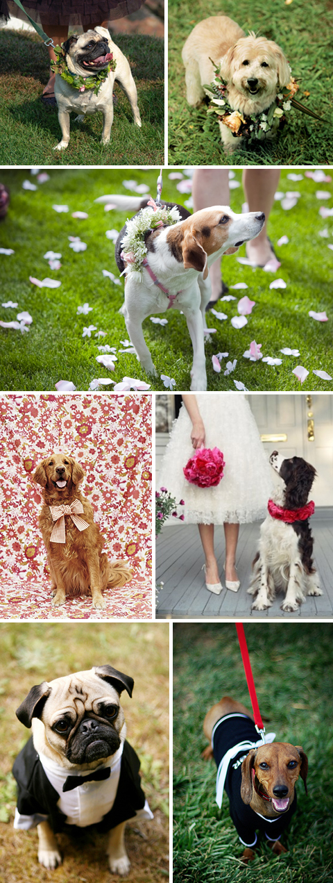Dog Ring Bearer Wedding Pet