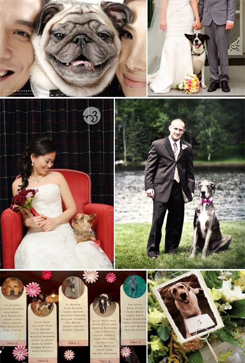 Your Pet Included in Wedding Portraits and Details